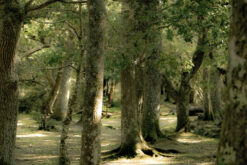 magical-trees-crop